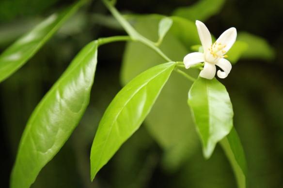 Lovely Flower- Lovely Gourmet