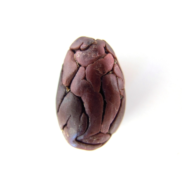 Cocoa bean lovely gourmet